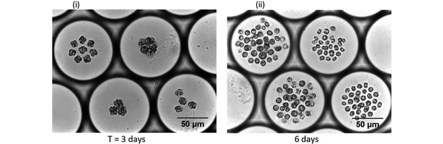 Growth of microalgae, C. reinhardtiicells, inside microdroplets
